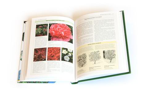 Краткая энциклопедия садового дизайна. Фото: Д.Журнал